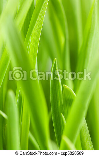 Fresh green grass isolated on white background - csp5820509