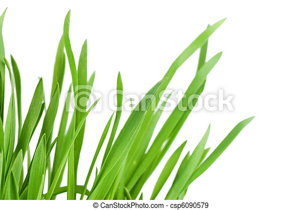 Fresh green grass isolated on white background - csp6090579