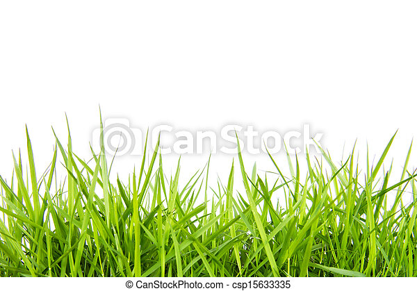 fresh green grass isolated on white - csp15633335