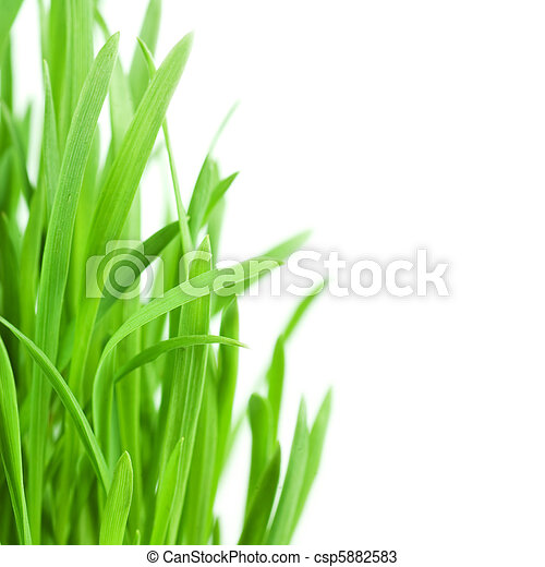 Fresh green grass isolated on white background - csp5882583