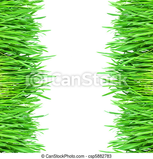 Fresh green grass isolated on white background - csp5882783