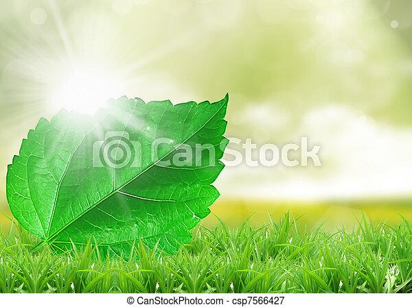 Fresh green grass on bright - csp7566427