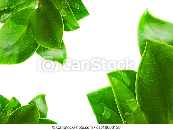Fresh green leaves isolated on white background - csp10608138