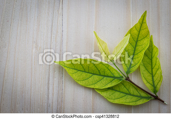 Fresh green leaves on the wooden floor - csp41328812