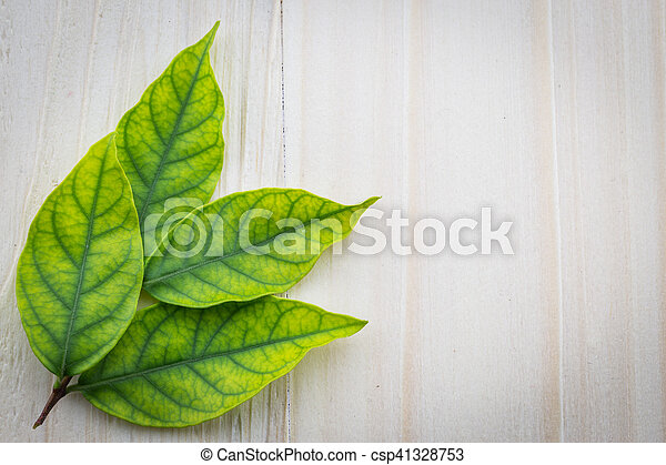 Fresh green leaves on the wooden floor - csp41328753