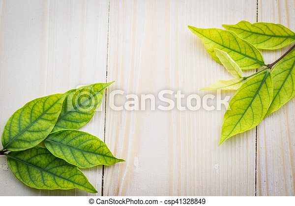Fresh green leaves on the wooden floor - csp41328849