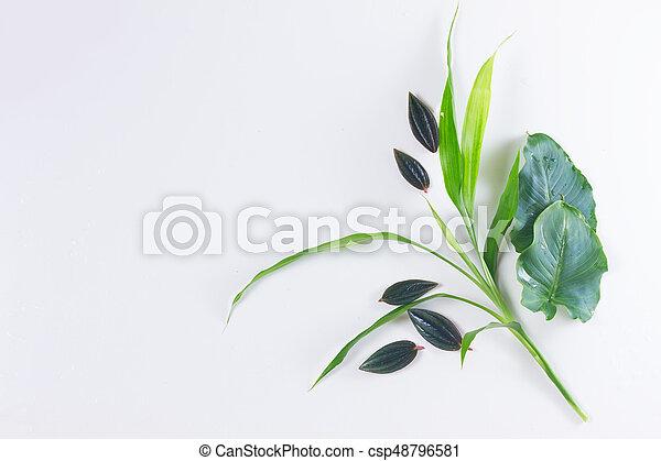 fresh green leaves - csp48796581