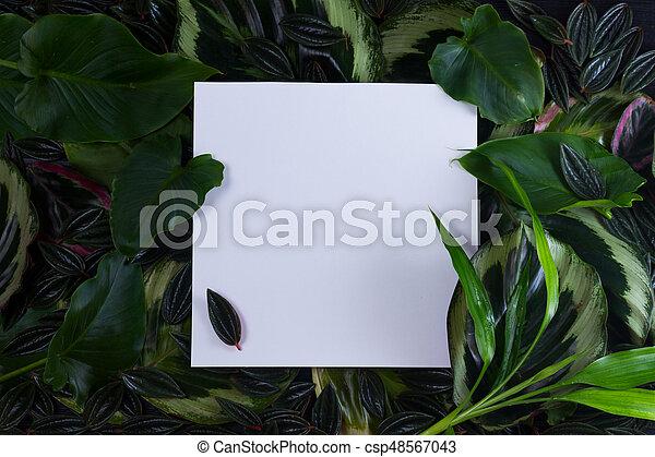 fresh green leaves - csp48567043
