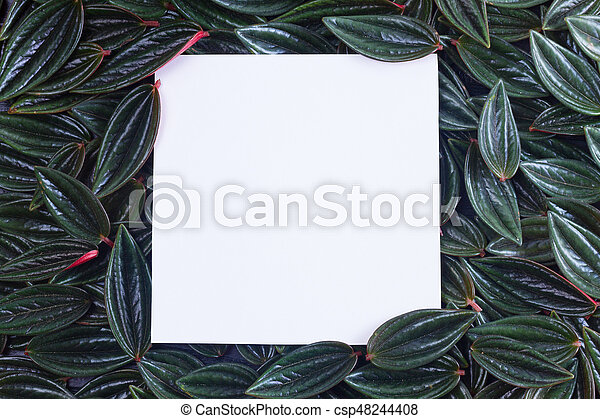 fresh green leaves - csp48244408