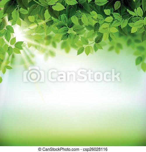 fresh green leaves  - csp26028116