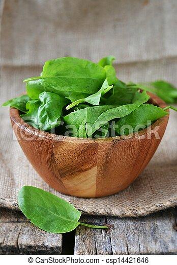 fresh green sorrel - csp14421646