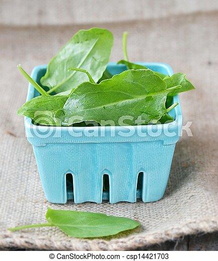 fresh green sorrel - csp14421703