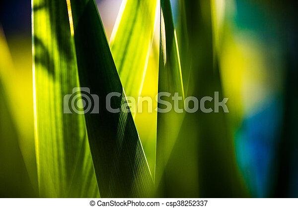 Fresh green spring grass - csp38252337