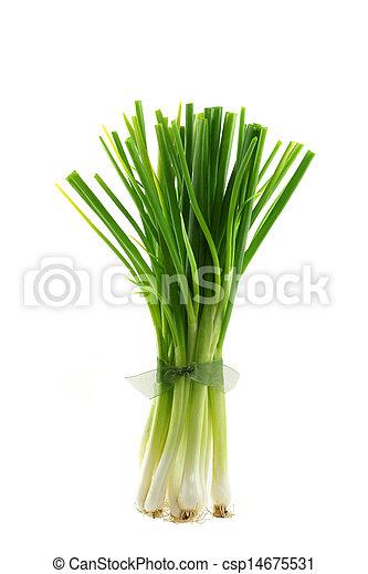 Fresh green Spring Onion - csp14675531