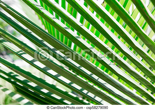 Fresh greenery palm leaves with geometric forms - csp58279090