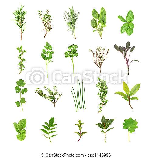 Fresh Herb Selection - csp1145936