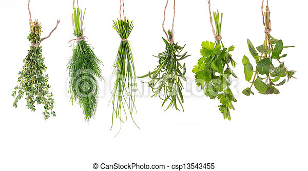 Fresh herbs hanging isolated on white background - csp13543455