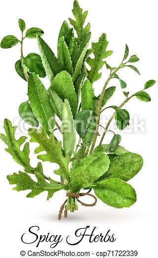 Fresh Herbs Realistic - csp71722339