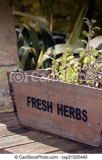 Fresh Herbs - csp21520440