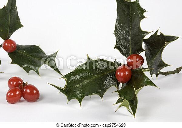Fresh holly ready for Christmas - csp2754623