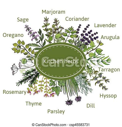 fresh kitchen herbs - csp45583731