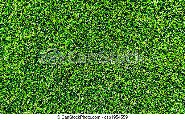 fresh lawn grass - csp1954559
