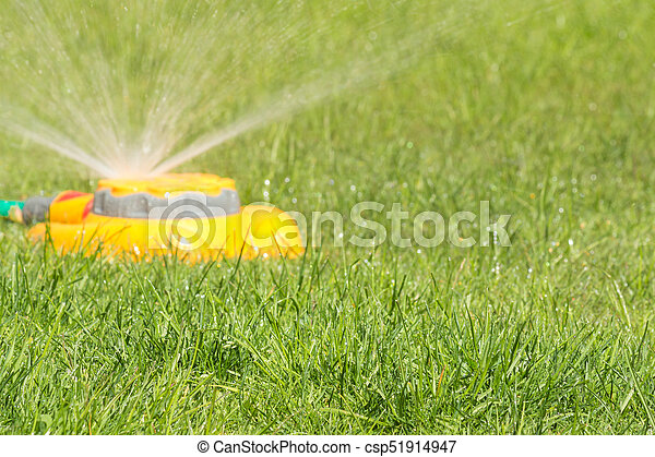 Fresh Lawn With Garden Sprinkler