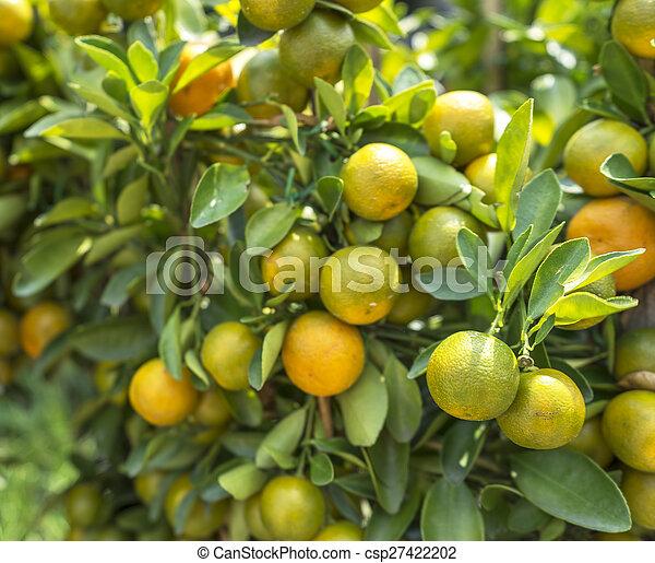 Fresh lime - csp27422202