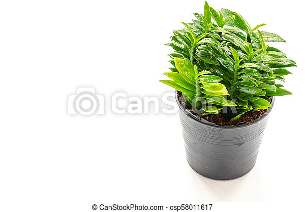 Fresh little tree on the white background in House - csp58011617