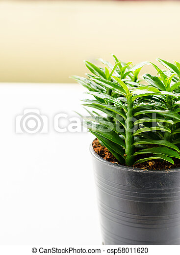 Fresh little tree on the white background in House - csp58011620