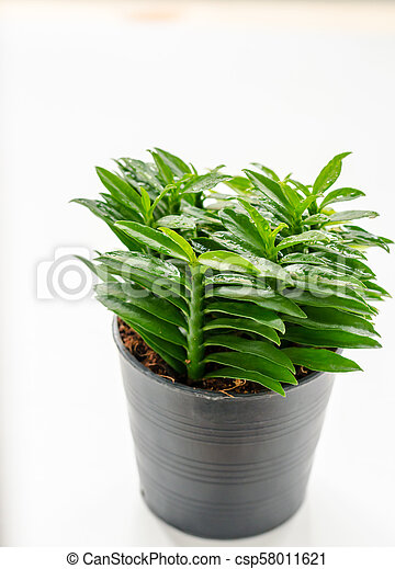 Fresh little tree on the white background in House - csp58011621