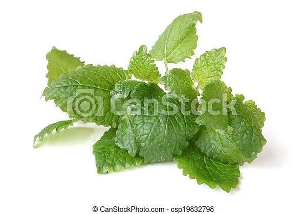 Fresh melissa leaves - csp19832798