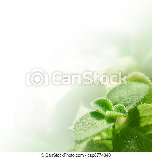 Fresh mint - csp8774048