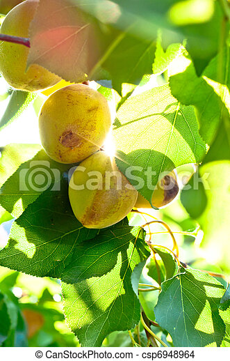 Fresh natural fruits with green leaves - csp6948964