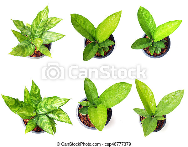 Fresh Of Green House Plants Top View Isolated On White Background