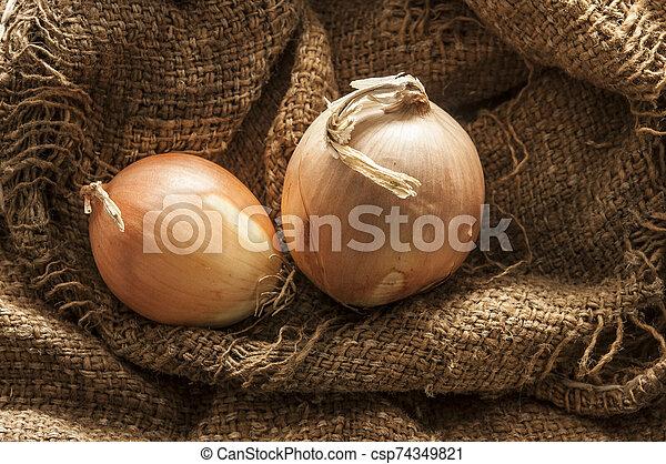 fresh onion in burlap sack bag - csp74349821