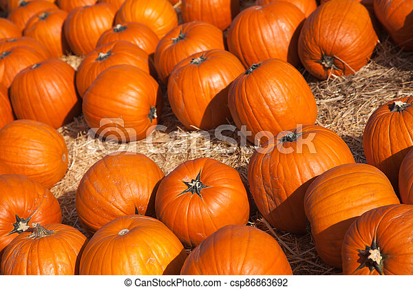 Fresh Orange Pumpkins and Hay in a Rustic Outdoor Fall Setting - csp86863692