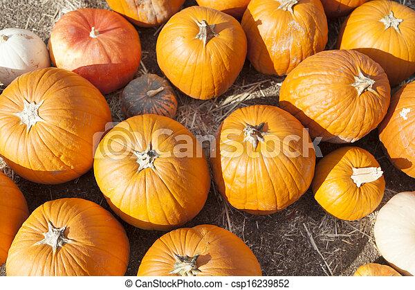 Fresh Orange Pumpkins and Hay in Rustic Fall Setting - csp16239852