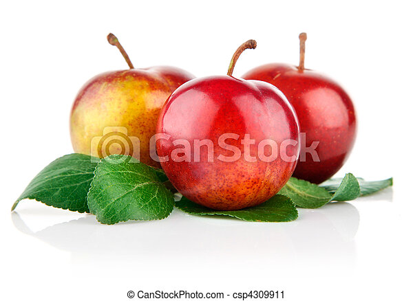 fresh plum fruits with green leaves - csp4309911