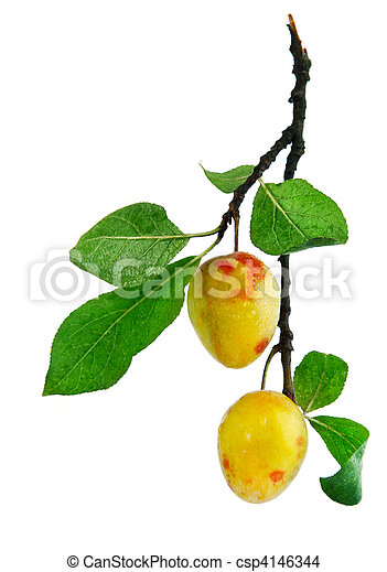 fresh plum fruits with green leaves - csp4146344