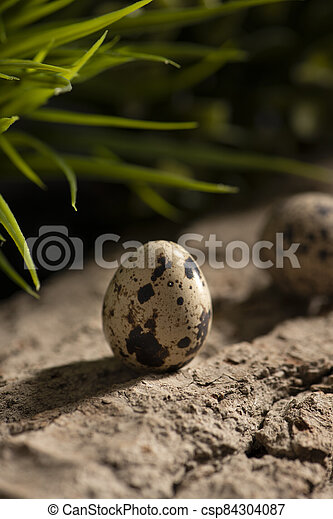 Fresh quail eggs in the forest on a wooden surface - csp84304087