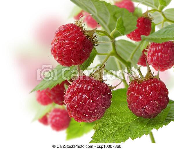 Fresh Raspberry - csp10087368