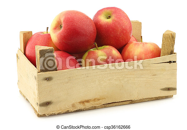 fresh red and yellow apples - csp36162666