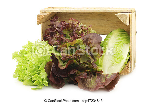 fresh romaine and red lettuce in a wooden crate - csp47234843