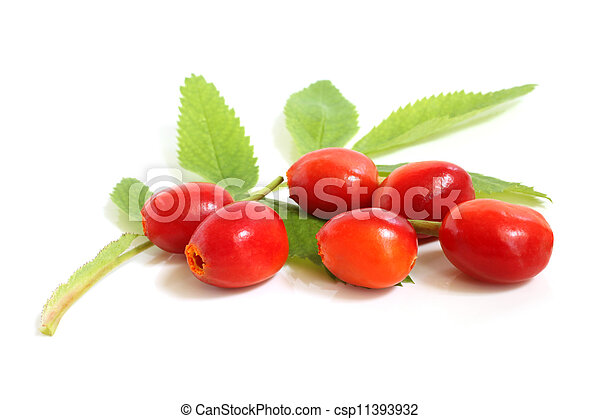 Fresh rose hips with leaves - csp11393932