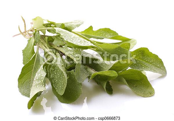 fresh rucola - csp0666873
