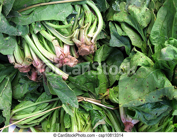fresh spinach and lettuce - csp10813314