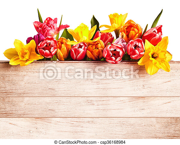 Fresh spring flowers forming a seasonal border colorful fresh fresh spring flowers forming a seasonal border csp36168984 mightylinksfo