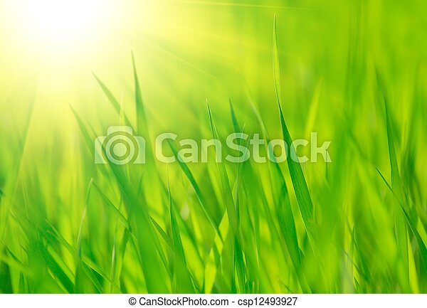 Fresh spring green grass and bright warm sun - csp12493927