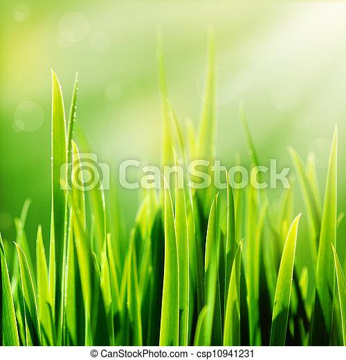 Fresh spring green grass and sun - csp10941231
